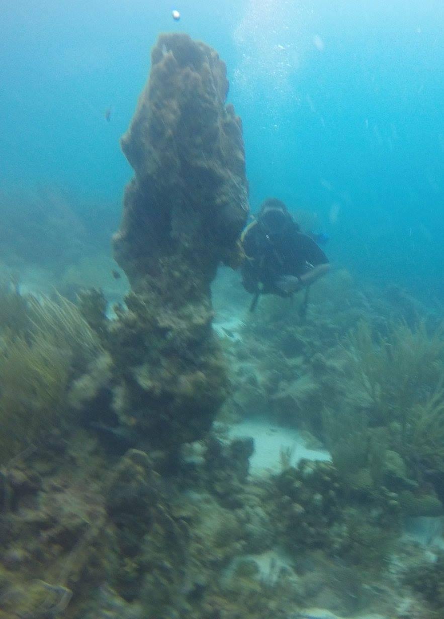 coral15.jpg