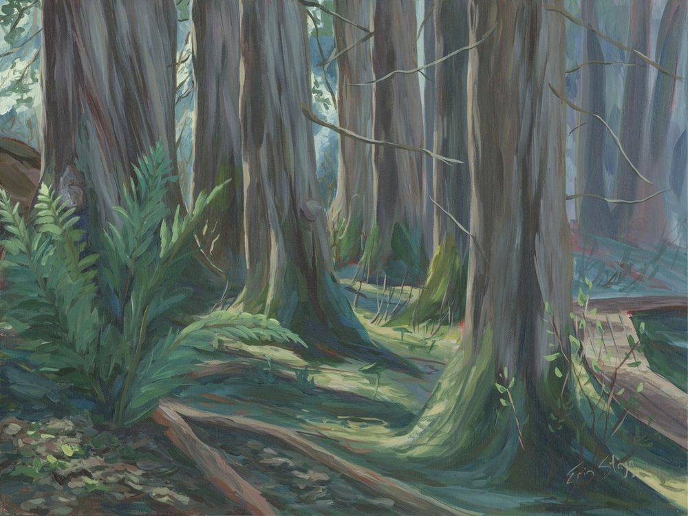 ancient forest 2 - sm.jpg