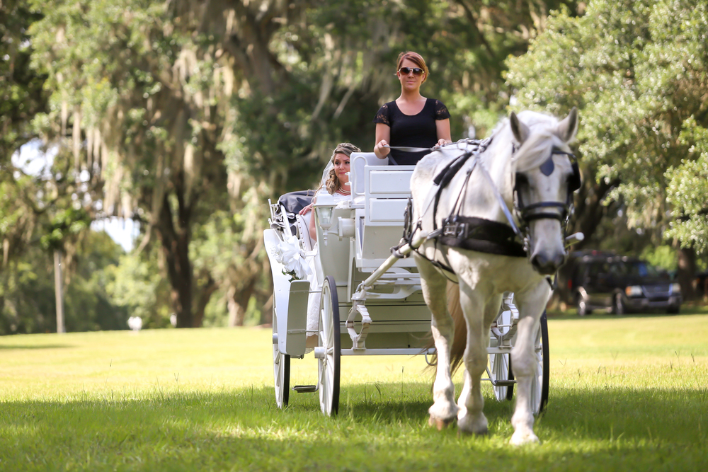The bride arrived to the ceremony in a horse-drawn carriage
