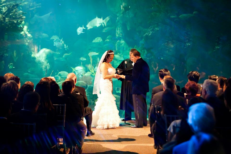 Guests sat in awe of the couple as they were married in front of this expansive tank.