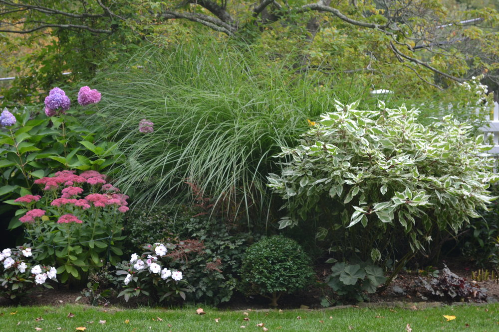 BB5Native Plant Combinations.jpg