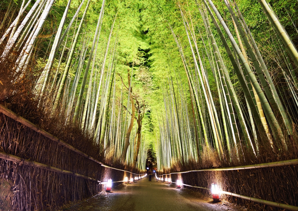 Bamboo Forest of Kyoto Japan