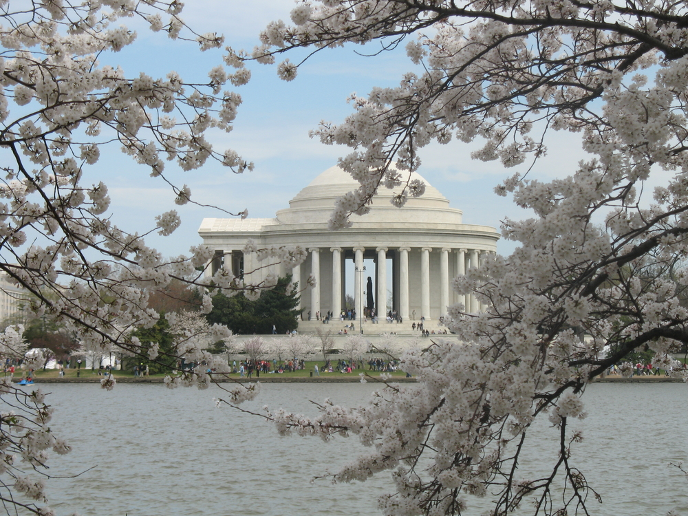 Cherry Blossom Festival in Washington, DC