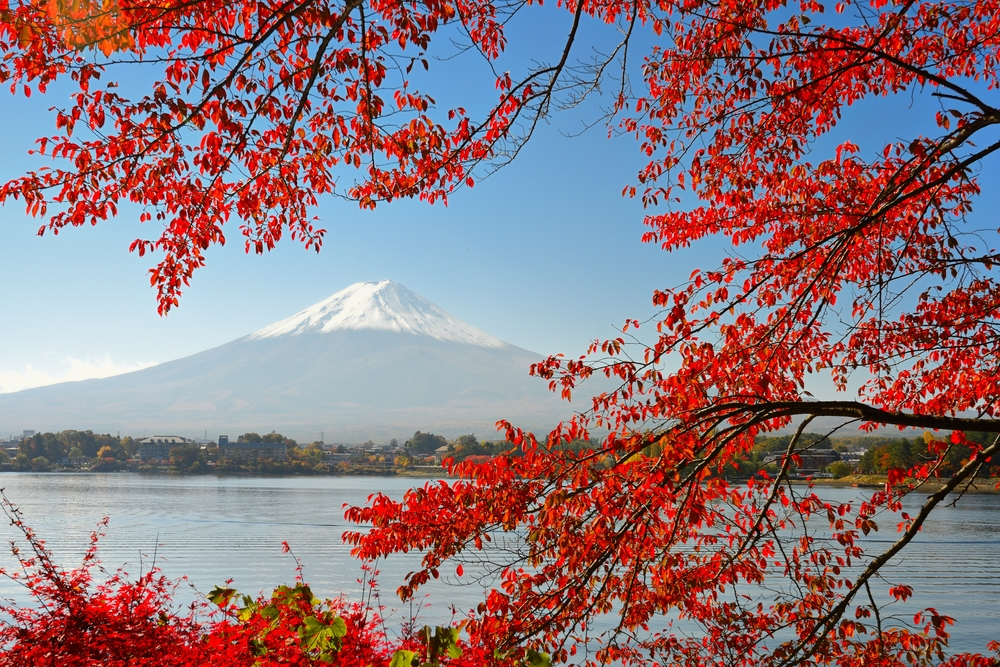Mountain Fuji in The Fall Season