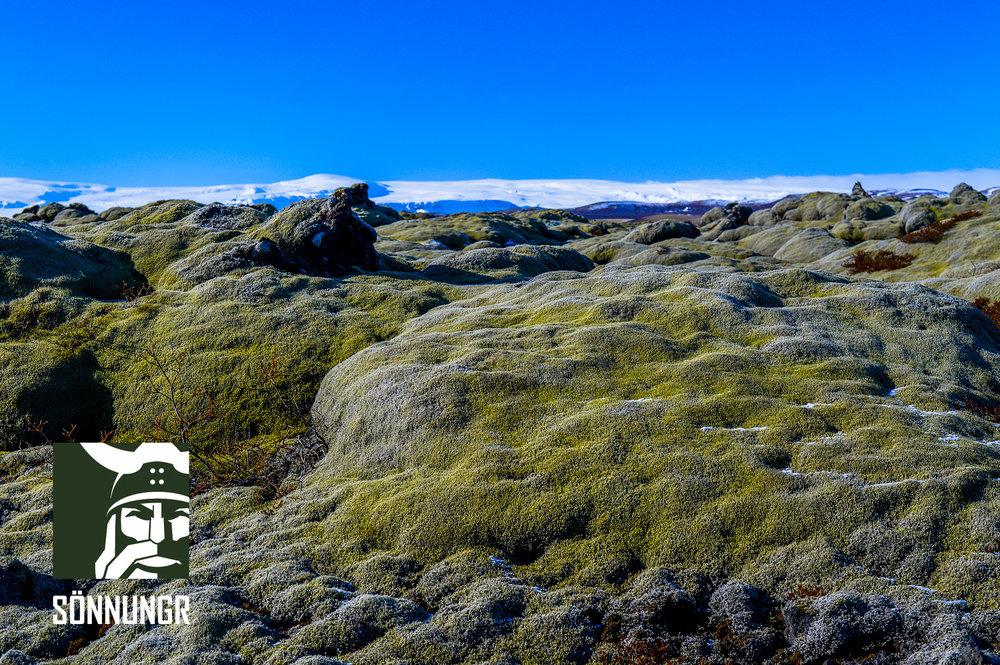 icelandic_moss.jpg