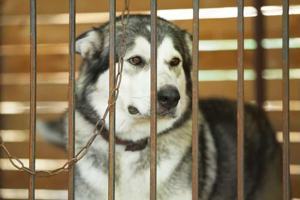 animal-abuse-and-cruelty.jpg