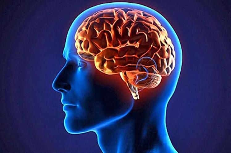 cerebro-humano.jpg