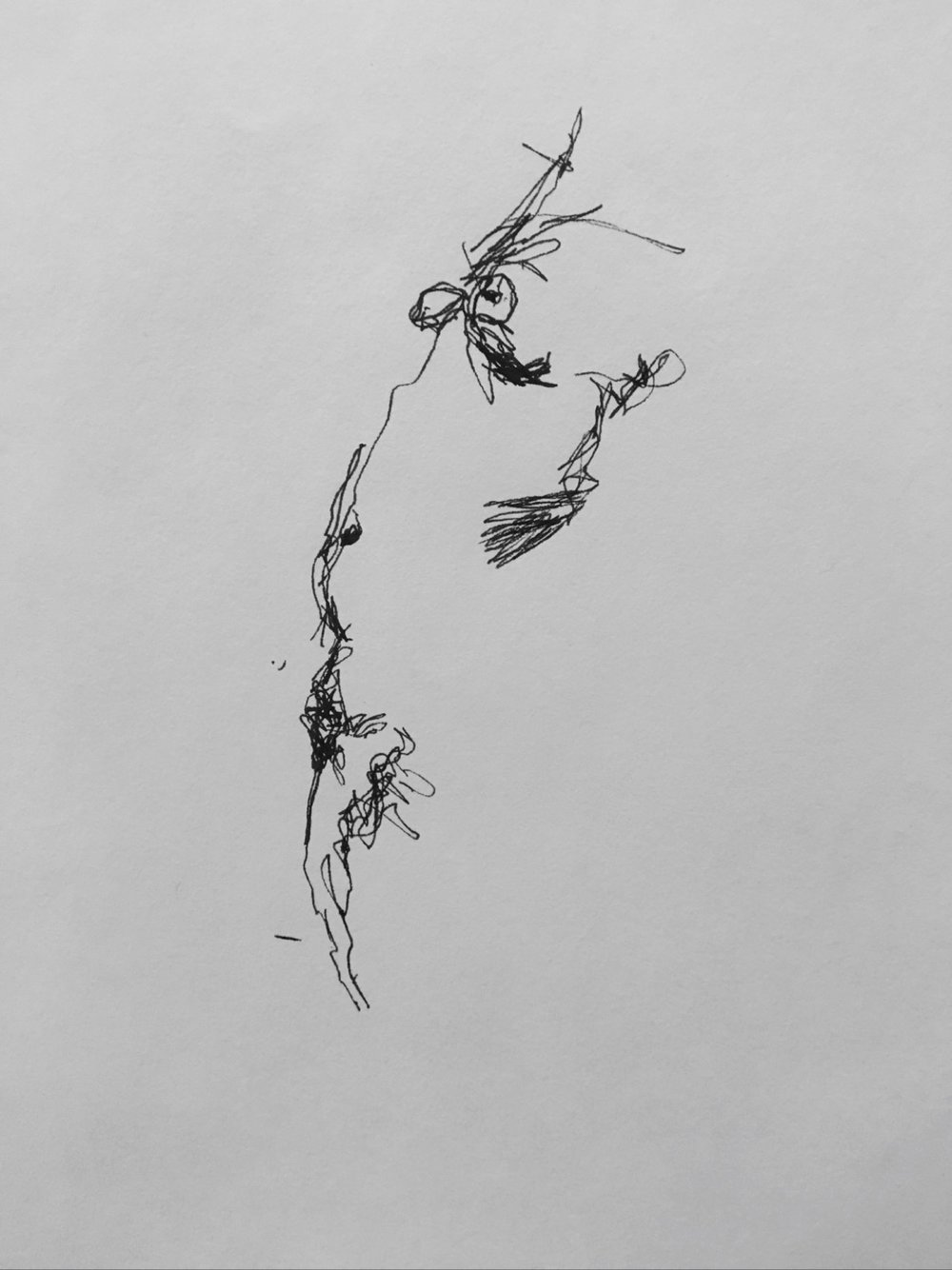 Drawing2 .jpg