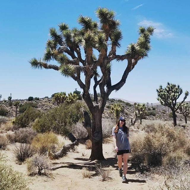 "Shoutout to the fellow Joshua Tree explorers who asked us if we knew where to go to see, ""THE [singular] Joshua tree."" 🤷🌳 📷: @_maomarr"