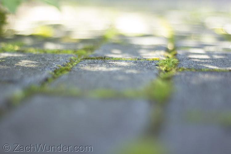 Brick Grass.jpg