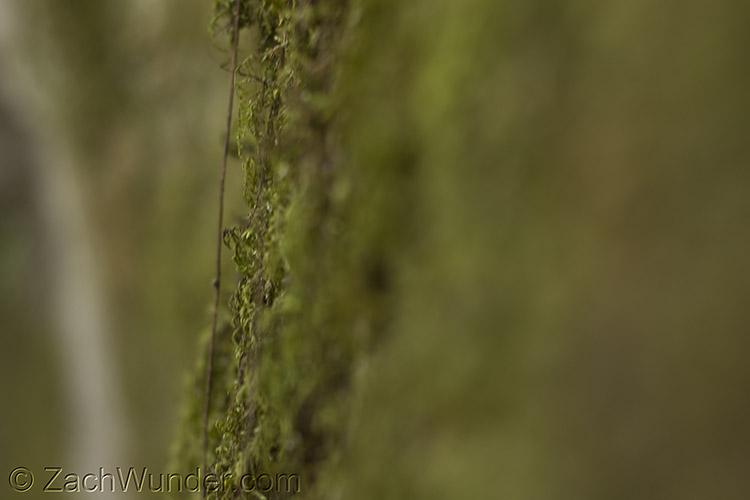 Mossy Brick.jpg