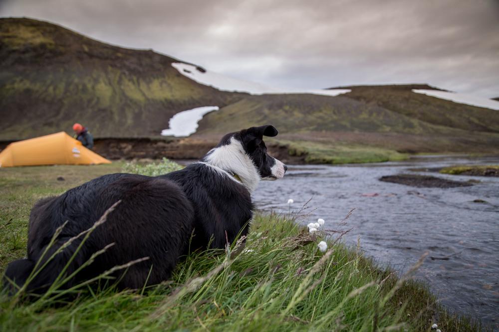 Iceland-6374.jpg