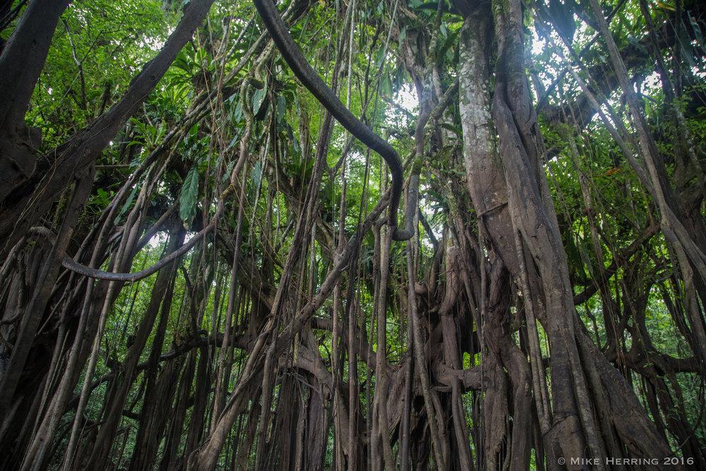 Cambodia-5300.jpg