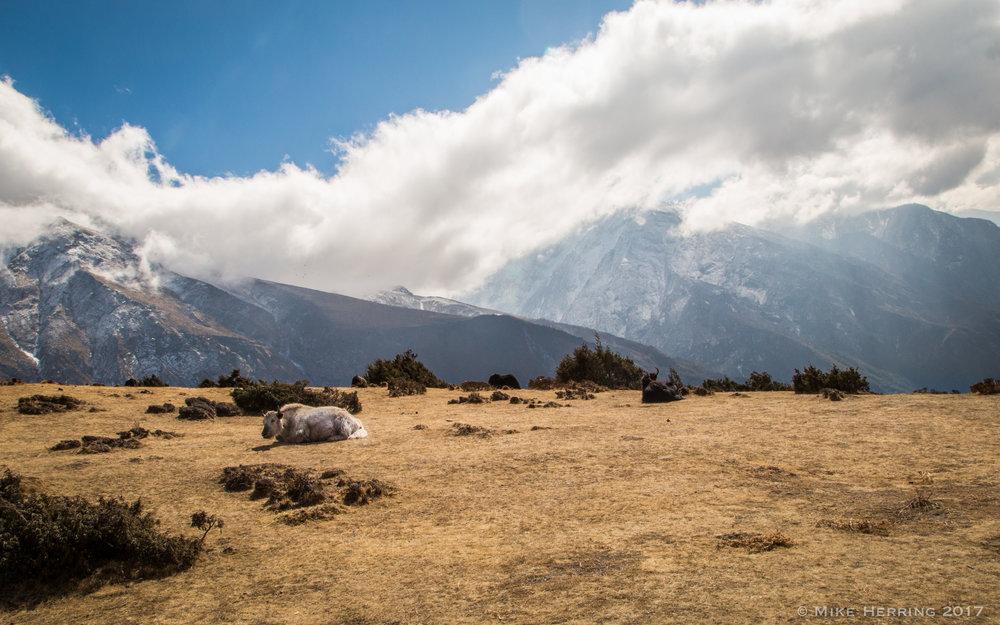 Nepal-7144.jpg