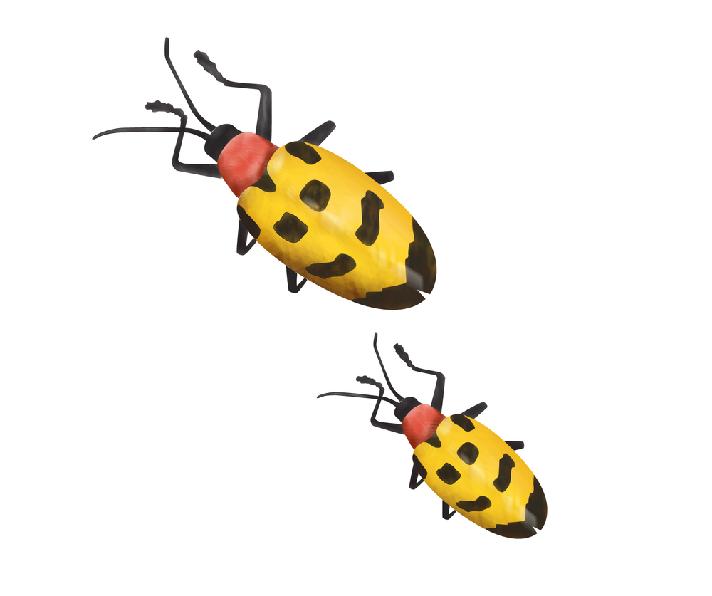 YellowBugs-01.jpg