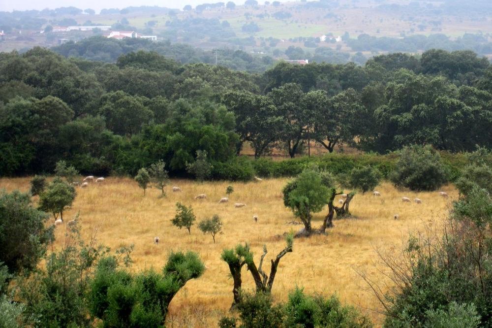 PORTUGAL - V Extramuros SheepDistance.jpg