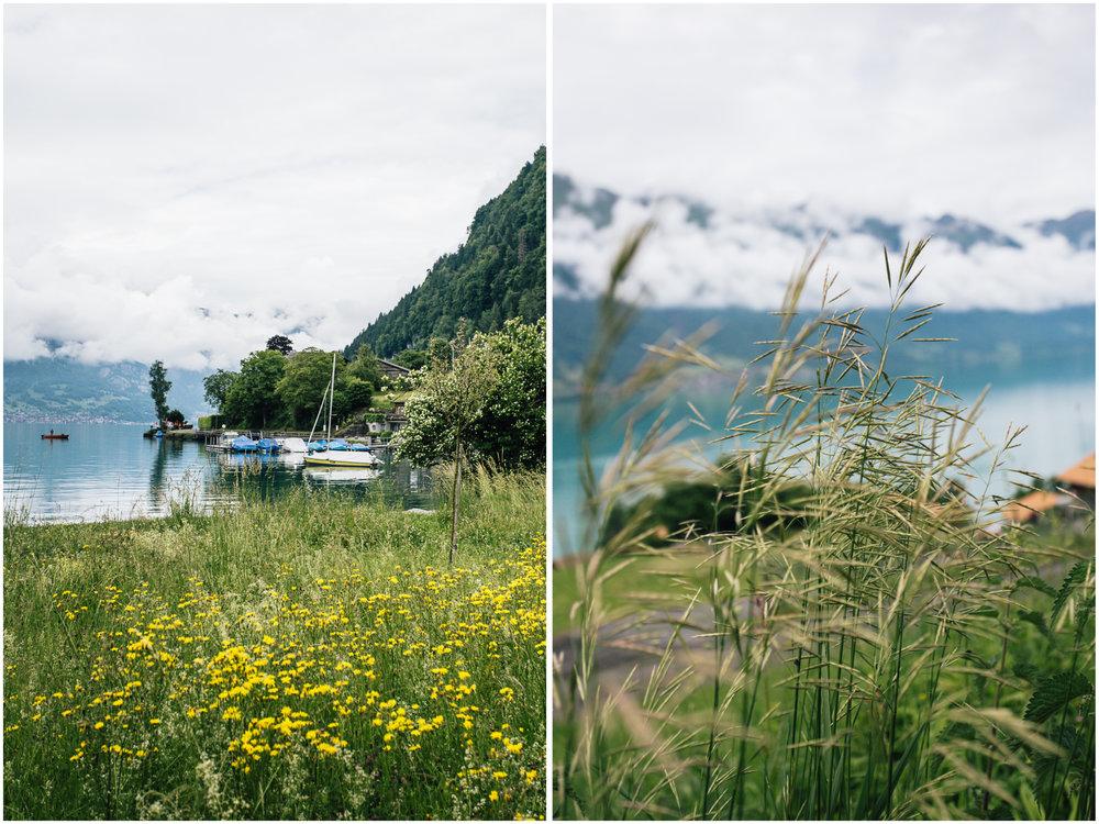 lakesgreenery.jpg