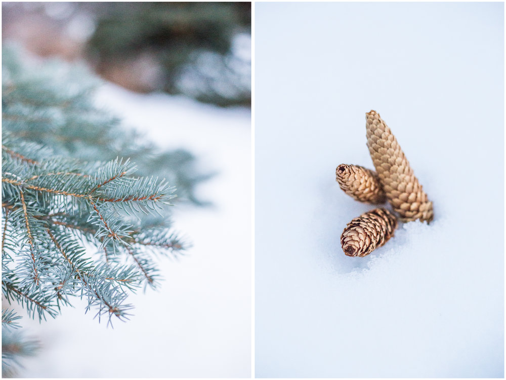 tree_corns.jpg