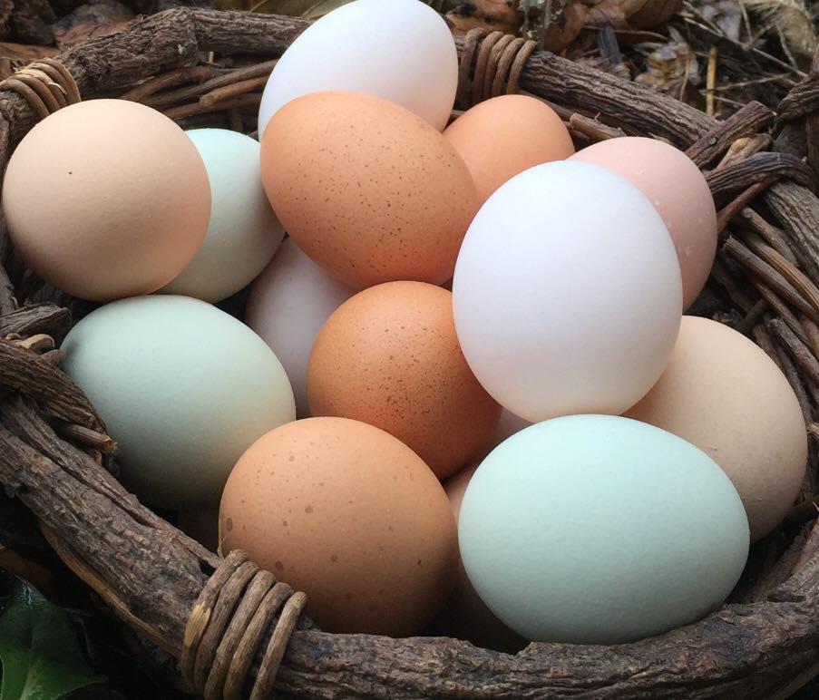 Eggs basket.jpg
