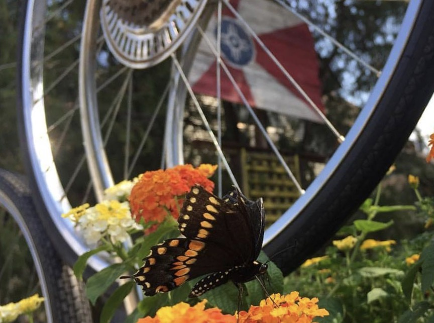 butterfly bike flag.jpg