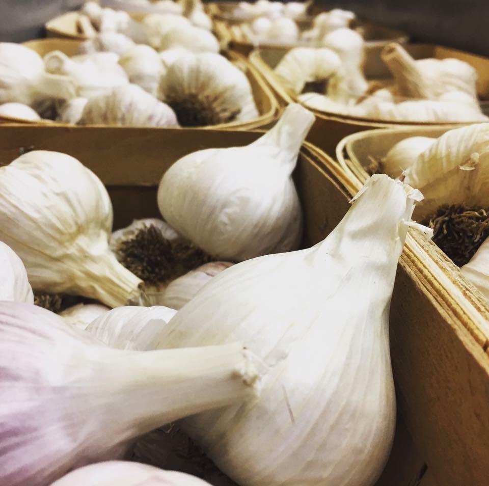 garlic pics.jpg