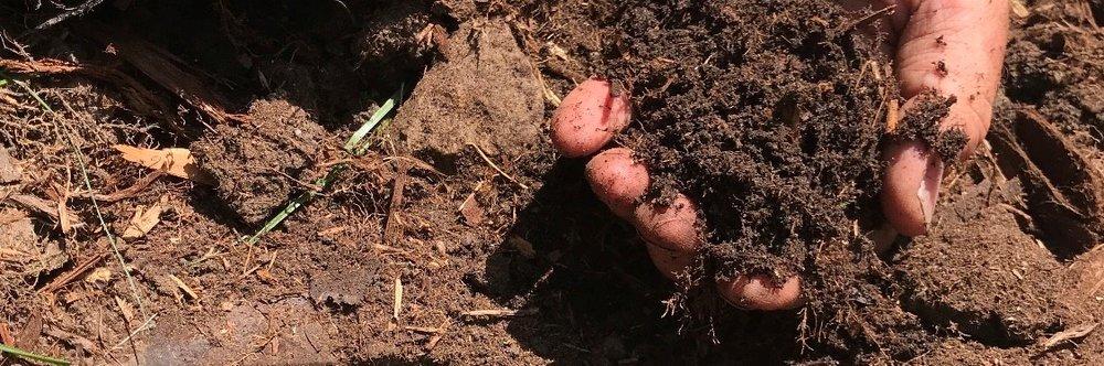 soil in hand .jpg