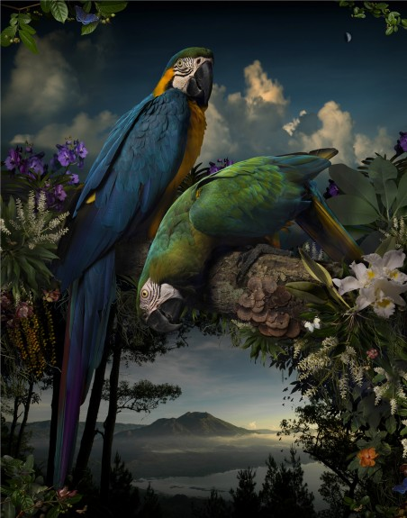 Florilegium #1, by Joseph McGlennon 2015 Bowness Photography prize winner