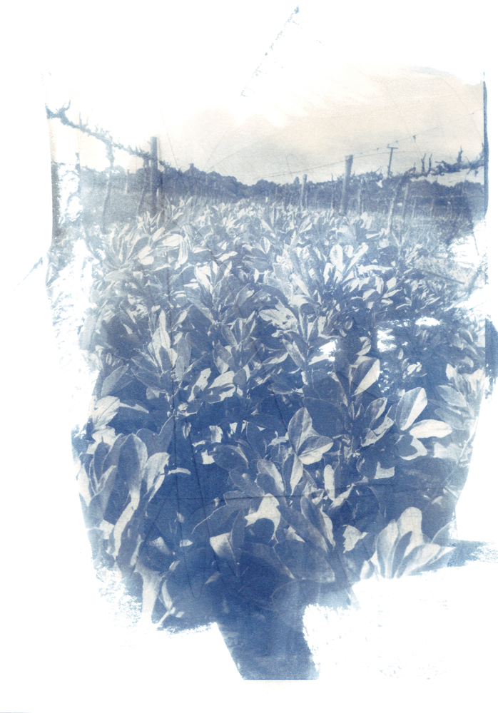 midrow smooth cyanotype.png