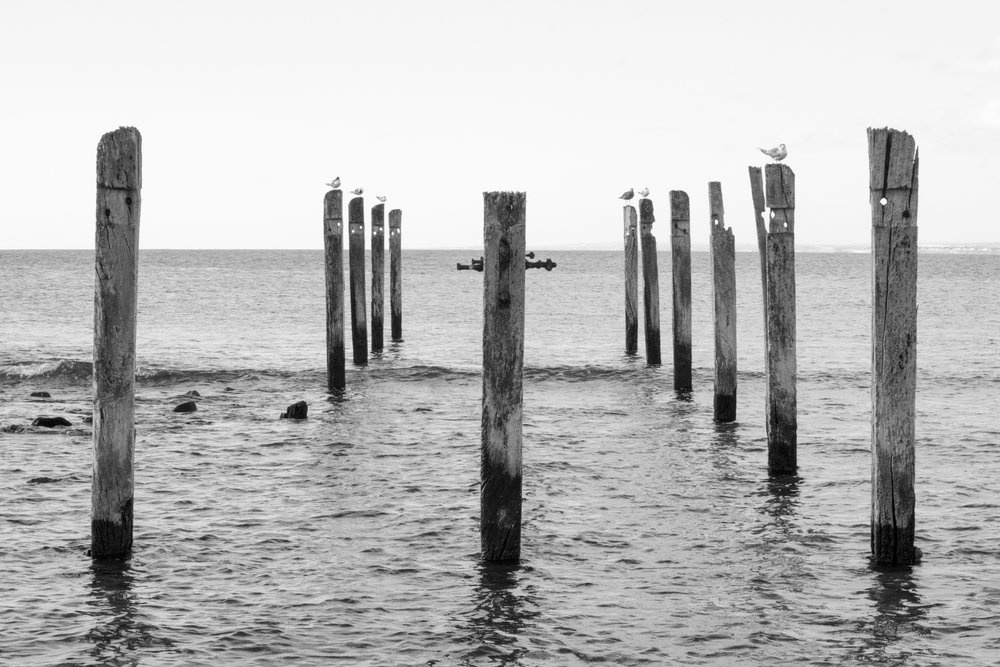 Jetty Ruins B&W tiana-potts-vet-awards.jpg