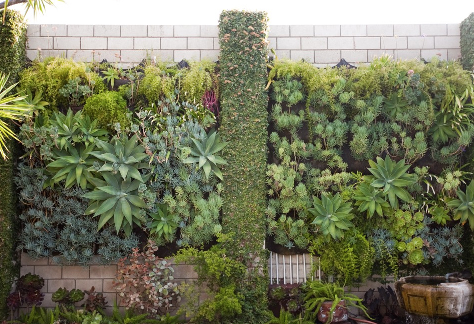 Image: SmogShoppe    The use of ivy between these vertical gardens hides hard surfaces to create a feeling of abundance.