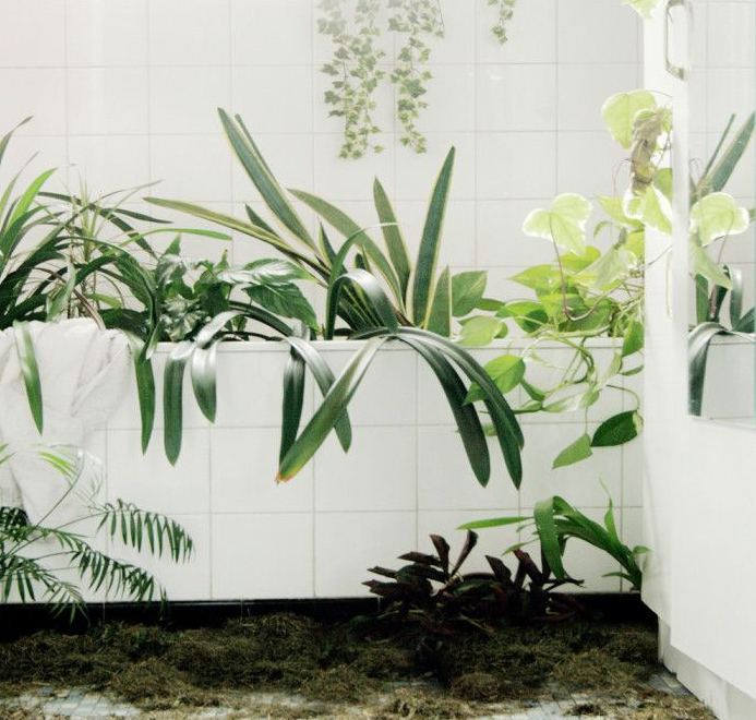 To keep indoor plants happy while you are away, leave them in a bath with a few inches of water. This also creates a humid environment for the plants. Image via Michel Le Belhomme