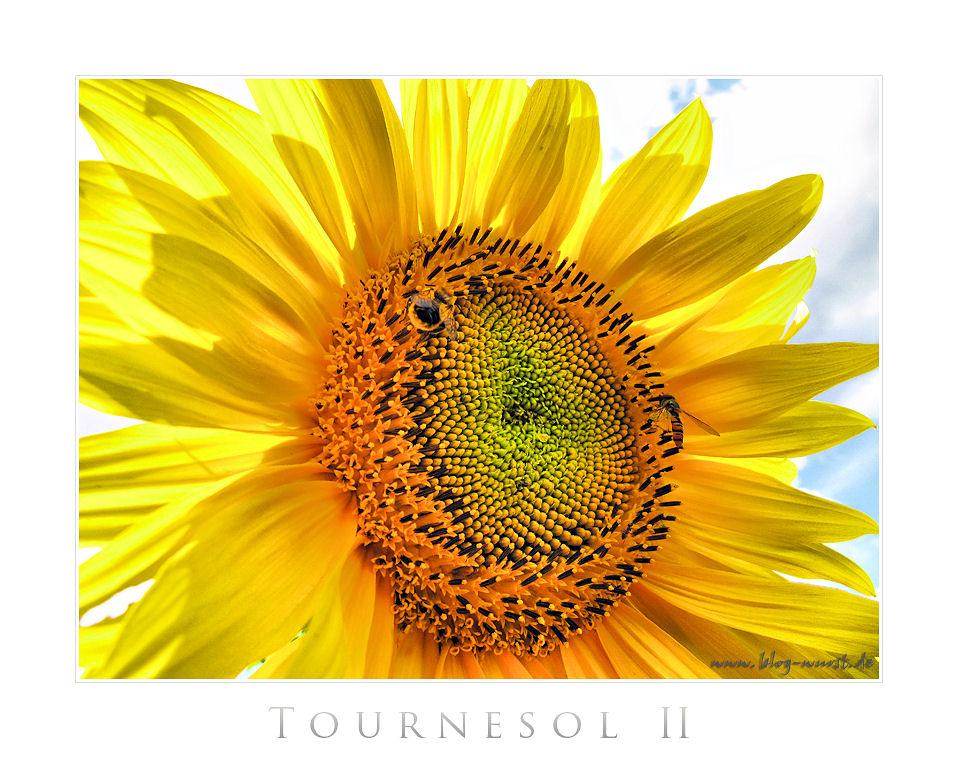 Tournesol (Sonnenblume) II