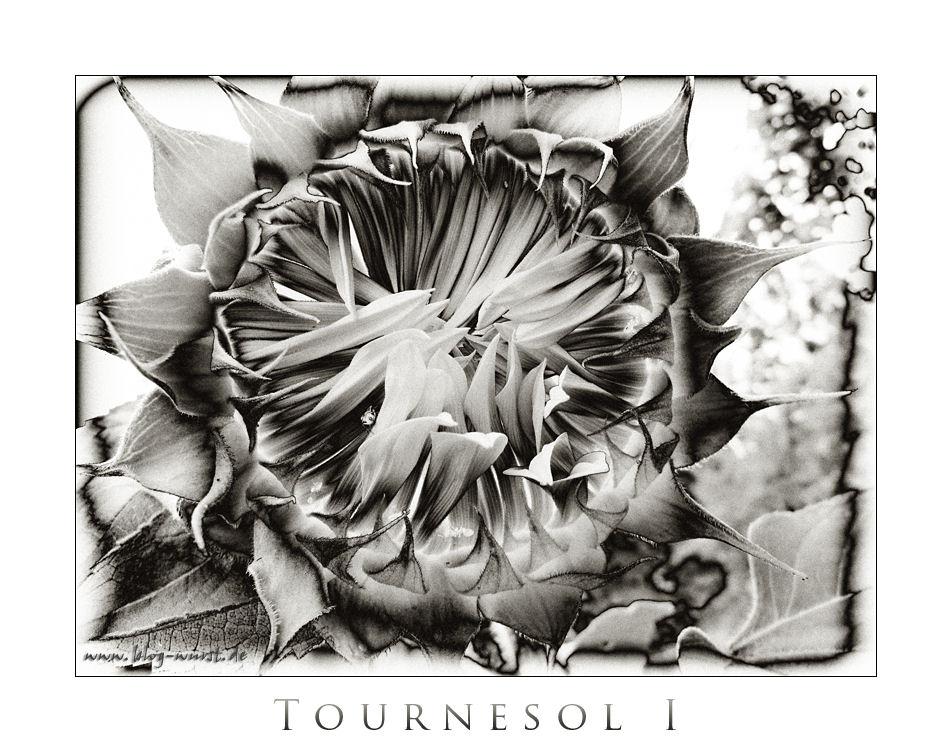 Tournesol (Sonnenblume) I