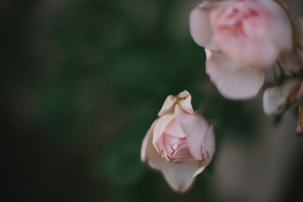 Smith & Archer Photography {Freelensed Photography}