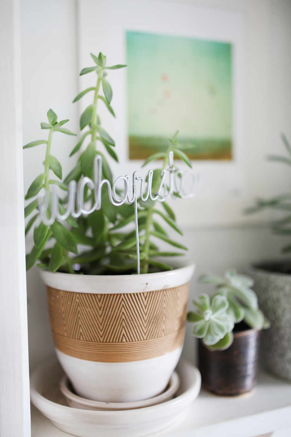 Home office inspiration - office ideas - office plants - potted plants - succulents -
