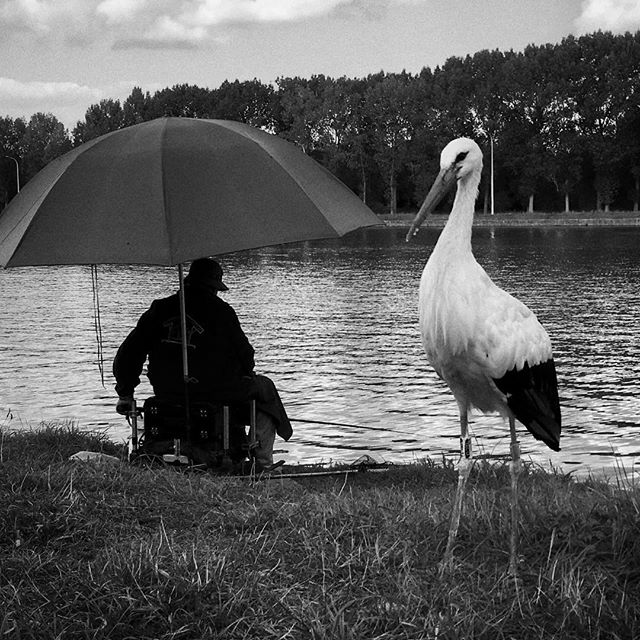 """Waiting for dinner?"" (#Humbeek, #Belgium 2017) A #stork keeps the fisherman's company; both waiting patiently for a fish to be caught. . . . #blackandwhitephotography #blackandwhite #bnw #bw #monochrome #ShotoniPhone #iPhone #iPhoneSE #iphoneography #snapseed #visitflanders #beleefdenatuur"