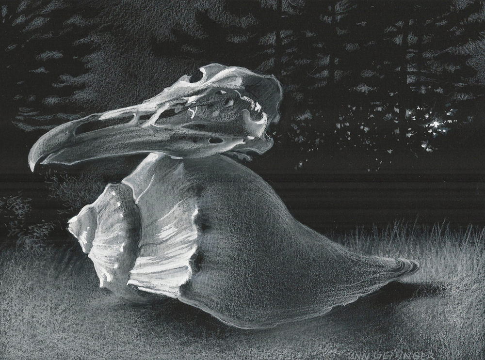 "Gull Skull and Shell, Night 7 3/4"" x 10 1/4"" 2014, drawing"