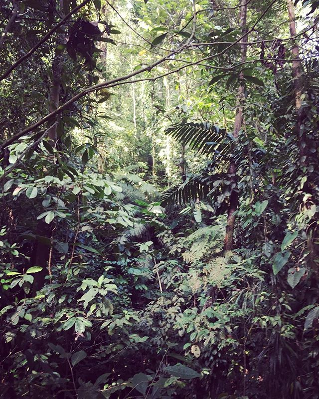 Virgin forest. Colombia. Secret project.  #colombia #jungle #wildlife #productionlife