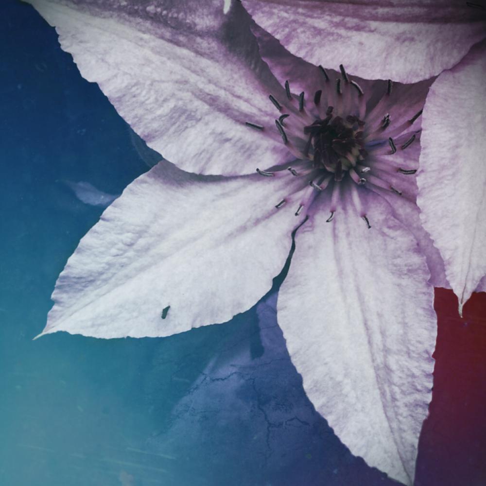 Flower Fade