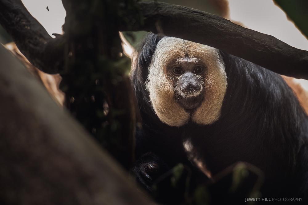 zoo-5.jpg