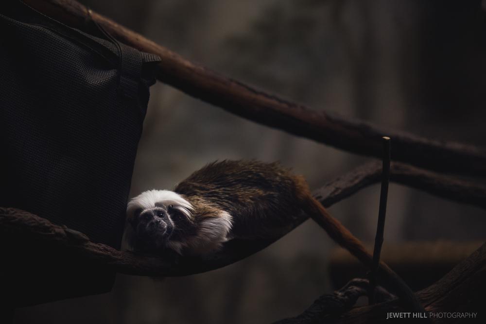 zoo-12.jpg