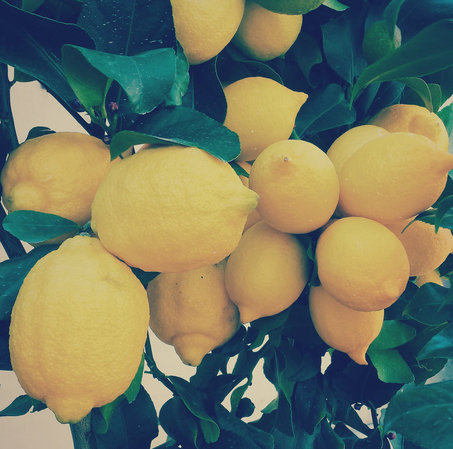 shoptwoblooms lemon tree.jpg