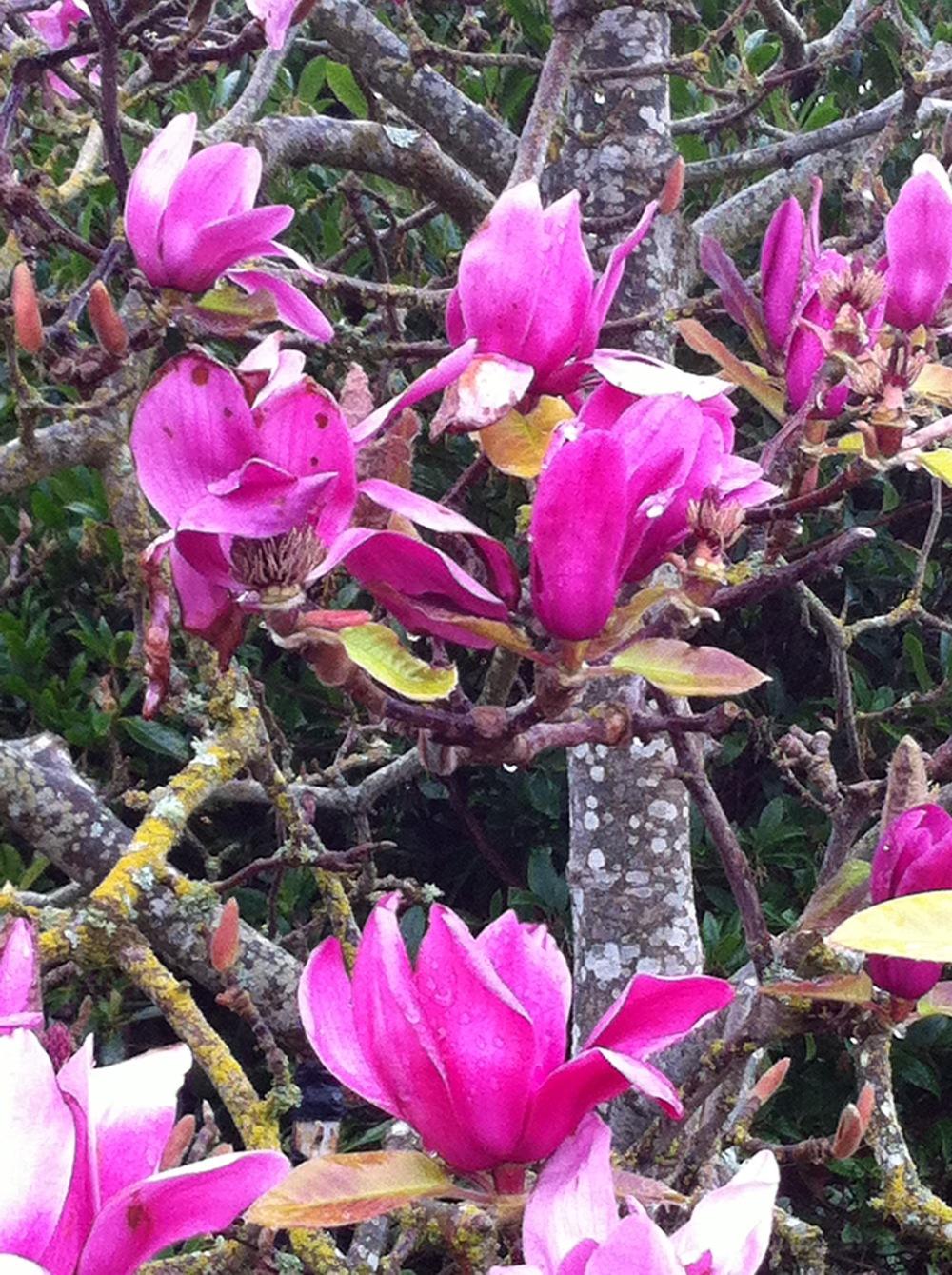 shoptwoblooms pink flowers.jpg
