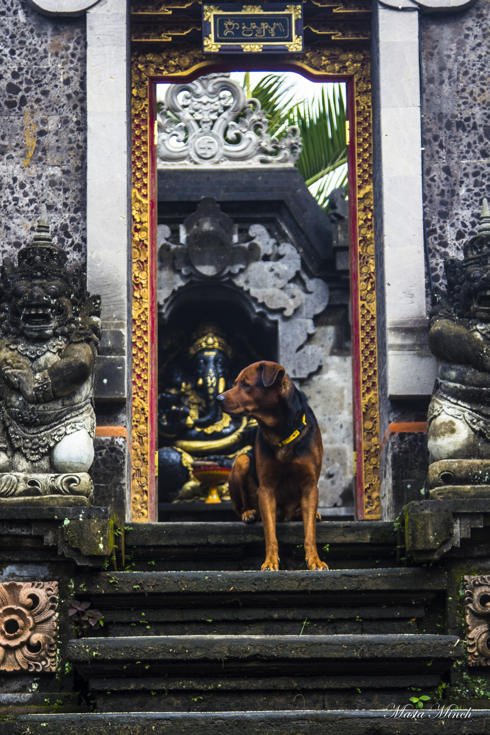 A dog standing guard in the doorway to someone's villa with Ganesha in the background. The remover of obstacles has a guard in front of him...