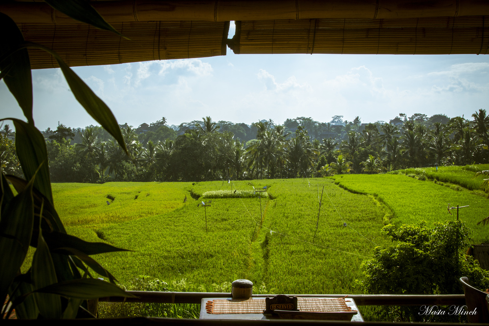 The view from Sari Organic in the rice fields of Ubud.