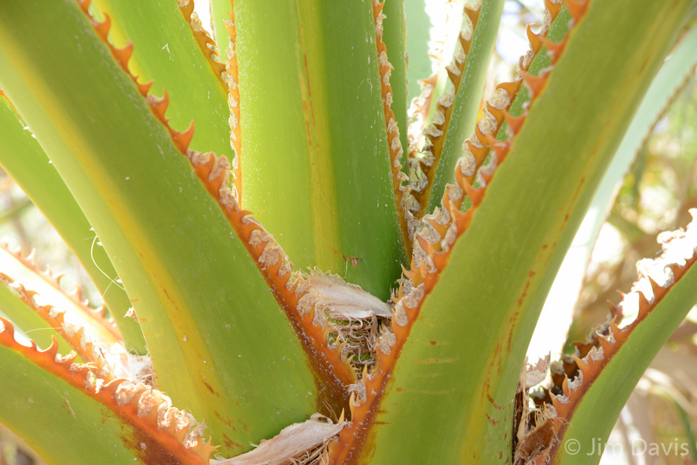 Palms-0360