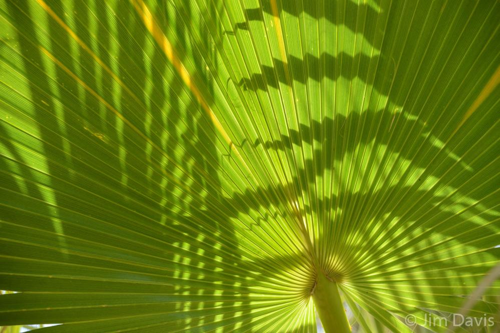 Palms-0397