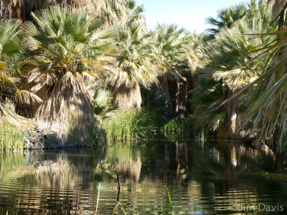 Palms- 1000878