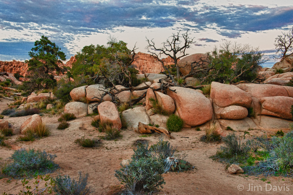 Joshua Tree -1863HDR