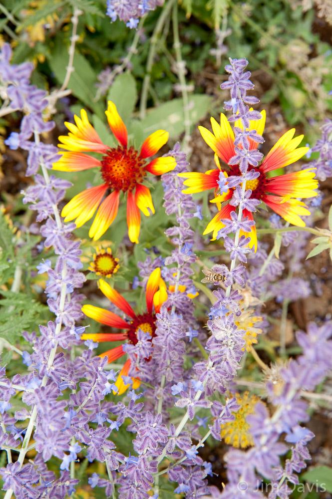 Flora-5620.jpg